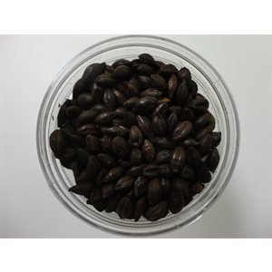 Roasted Barley Malt 1 / 4 LB